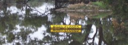 Loddon Shire Council: Road Infrastructure Flood Program